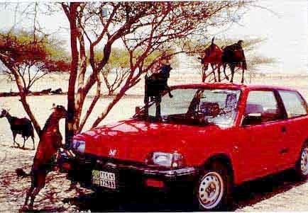 UAE-redcar