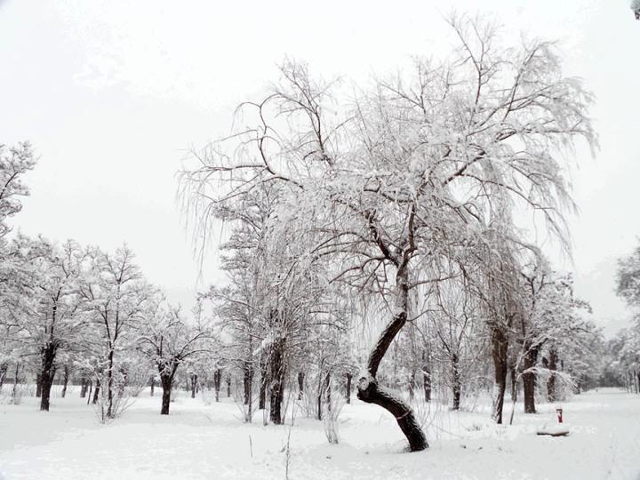 Winter AGU Campus